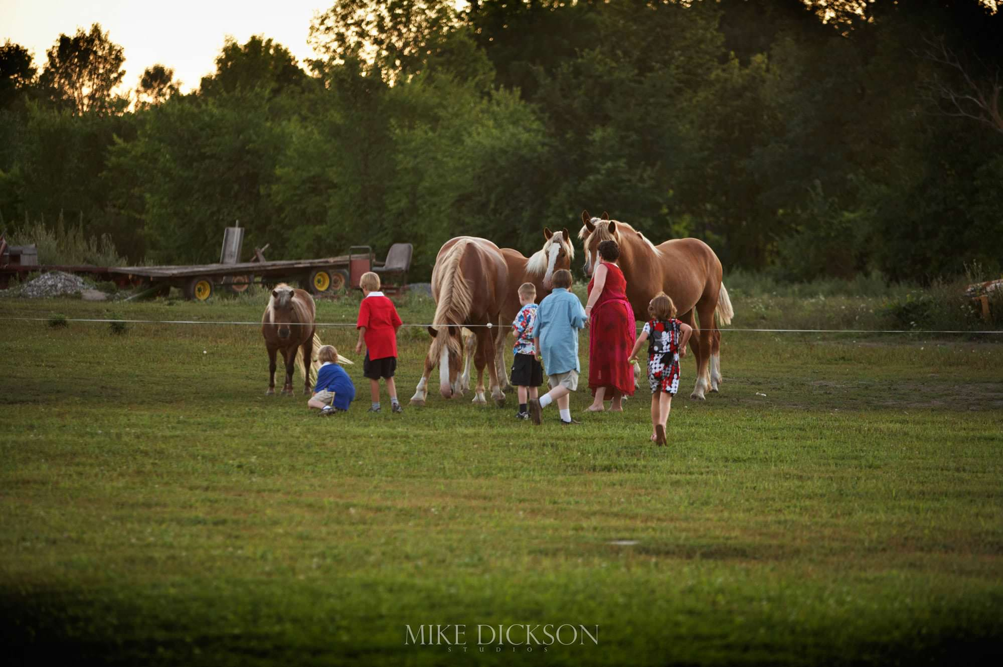 Ontario, Ottawa, Stanley's Old Maple Lane Farm, STD, Summer, Wedding, © Mike Dickson